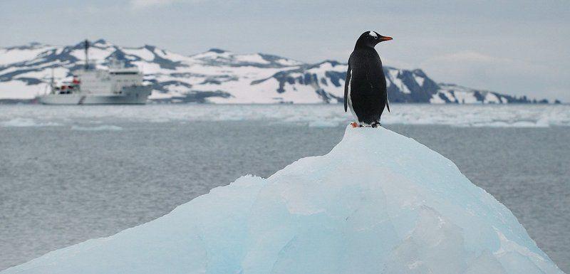 пингвин, антарктика, беллинсгаузен, В Дозореphoto preview
