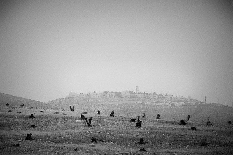 Земля Обетованная. (В окрестностях Иерусалима.)photo preview