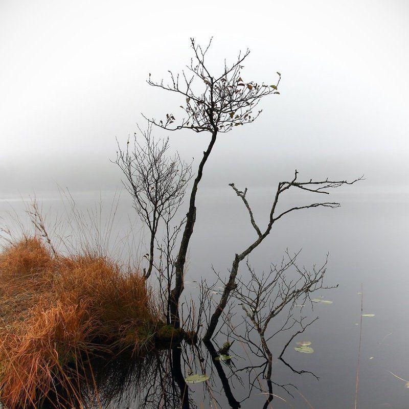 туман, озеро, деревце Деревцеphoto preview