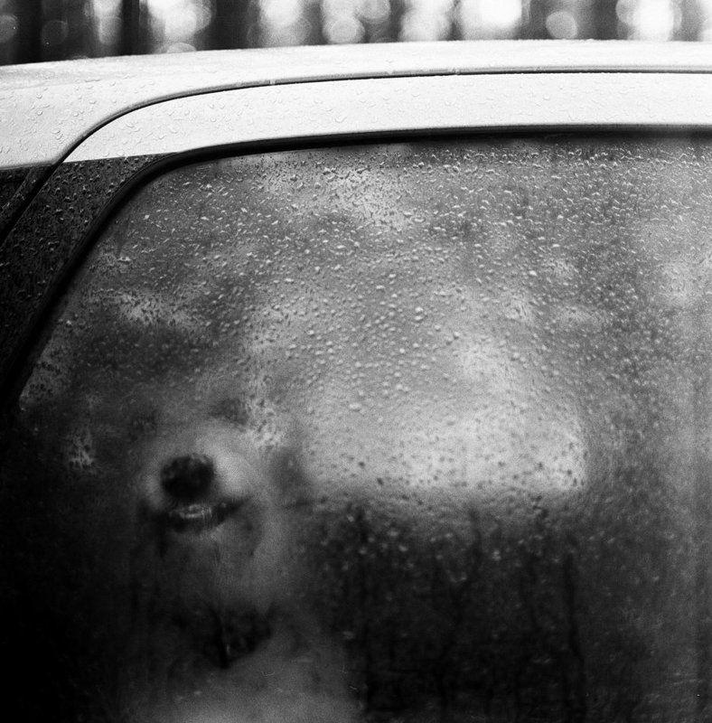 собака, стекло, дождь, улыбка, машина, окно Другphoto preview