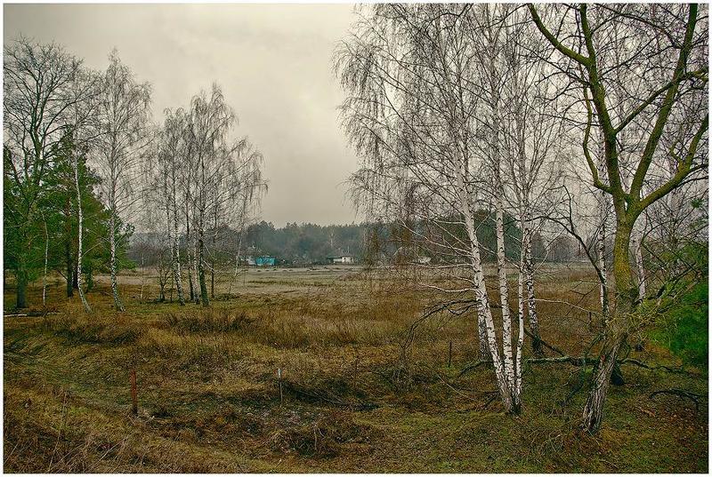полесье, апрель, моросит Когда деревья еще спали...photo preview