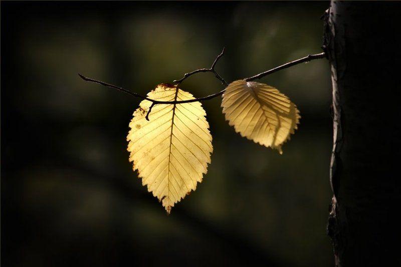 осень, листва С родительской веткой прощаются.. В дальний путь собираются..photo preview