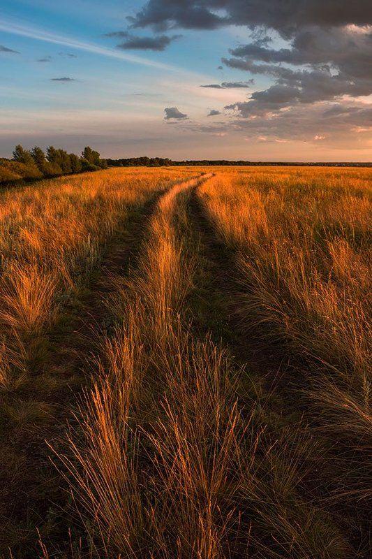 Пейзаж, природа, полевая дорога, вечерний свет Дорогаphoto preview