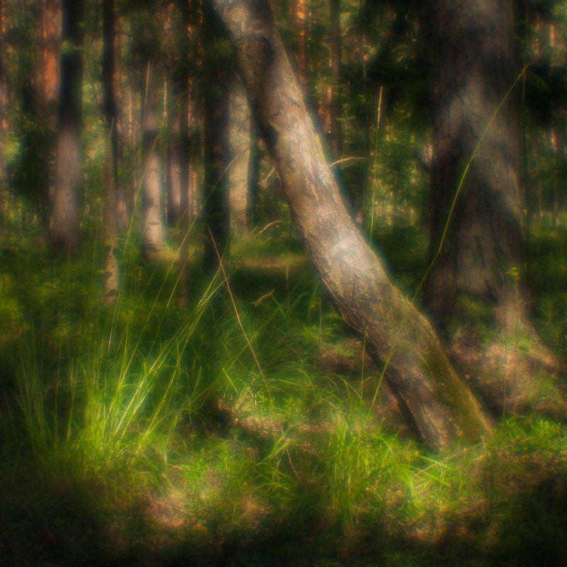 пейзаж, природа, монокль, monolens, дубна, пиктореализм Там, на неведомых дорожкахphoto preview