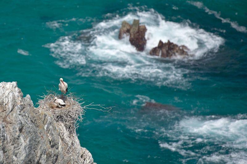 путешествия, португалия, птицы, океан, природа, nikon, d810, travel, nature, birds, portugal, ocean Аисты над океаномphoto preview