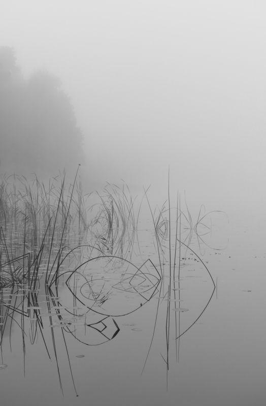 туман, озеро, силуэт, черно-белый Туманное утро.photo preview