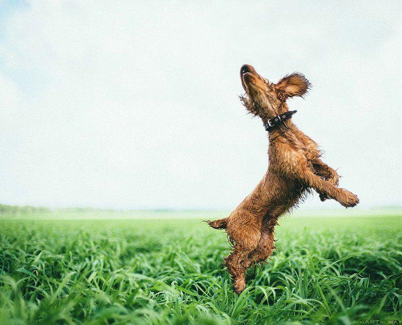 собака Up&Upphoto preview