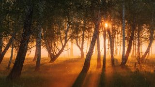 Очарованный лес