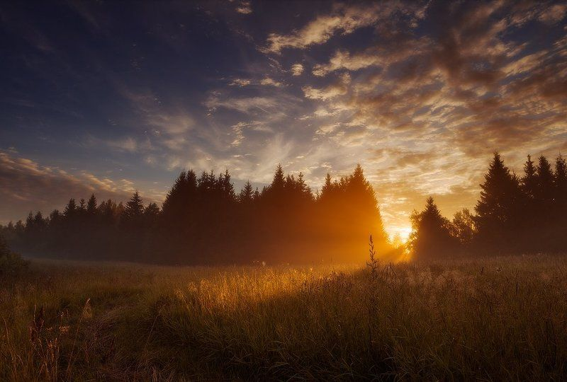 Clouds, Forest, Light, Meadow, Mist, Morning, Summer, Sunrise The day beginsphoto preview