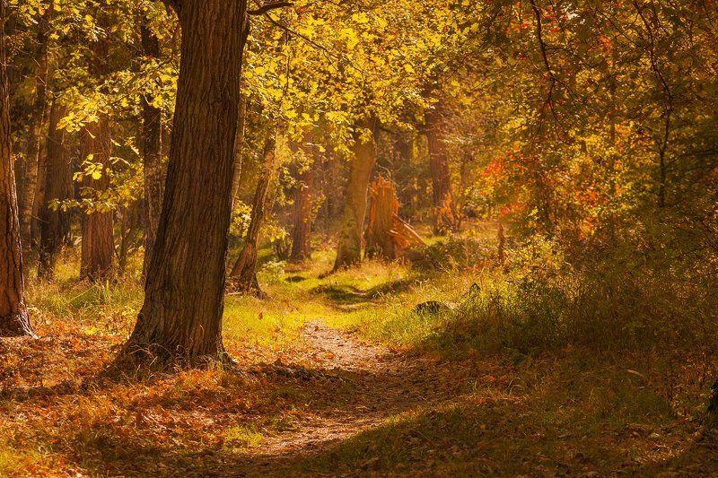 фото, осень, рязань, краски, цвет, природа Краски осени.photo preview