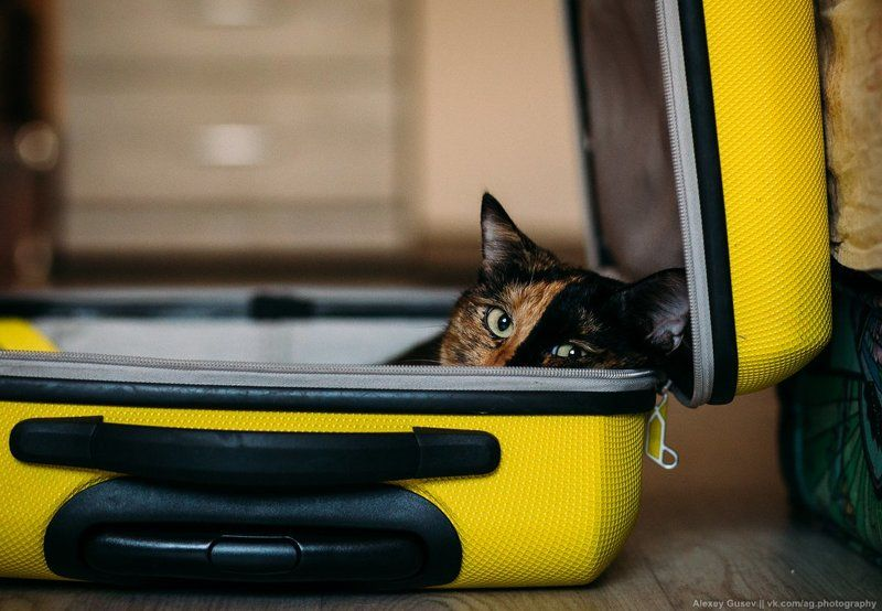 cat,bag,suitcase,travel,wanderlust,road,trip,yellow Vacation timephoto preview
