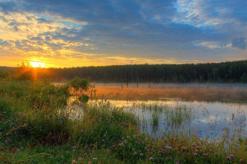 Берег, Клевер, Лес, Лето, Небо, Облака, Пейзаж, Природа, Рассвет, Солнце, Трава, Утро Утренняя тишинаphoto preview