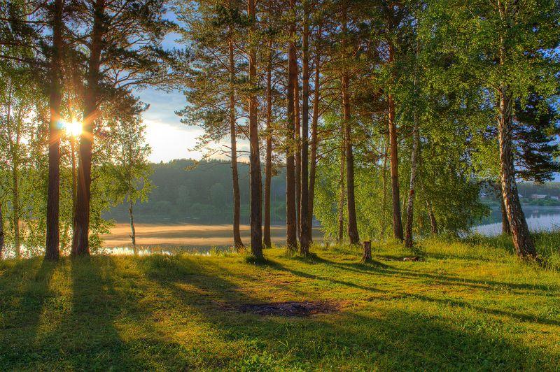 Вода, Деревья, Лес, Небо, Пейзаж, Природа, Рассвет, Река, Свет, Солнце, Тени, Трава, Утро Утренние тениphoto preview