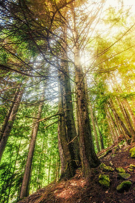 теберда, бадук, кавказ, горный лес Лесная сказкаphoto preview