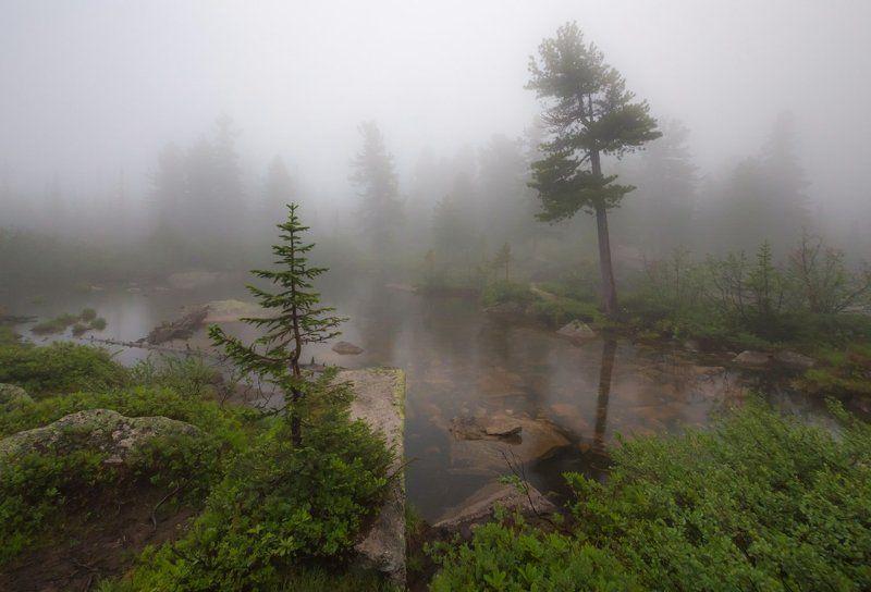Туман, Ергаки, Саяны, Западный Саян, тайга Туманно, свежо...photo preview