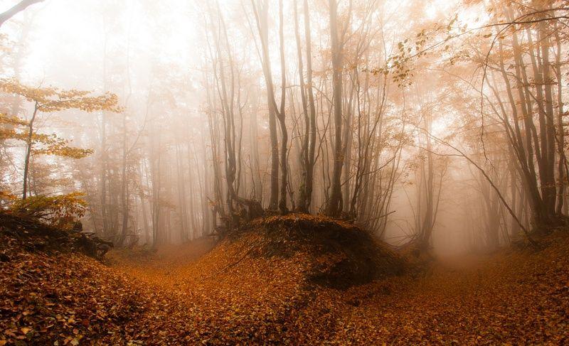 Туманные склоны осенних Карпатphoto preview