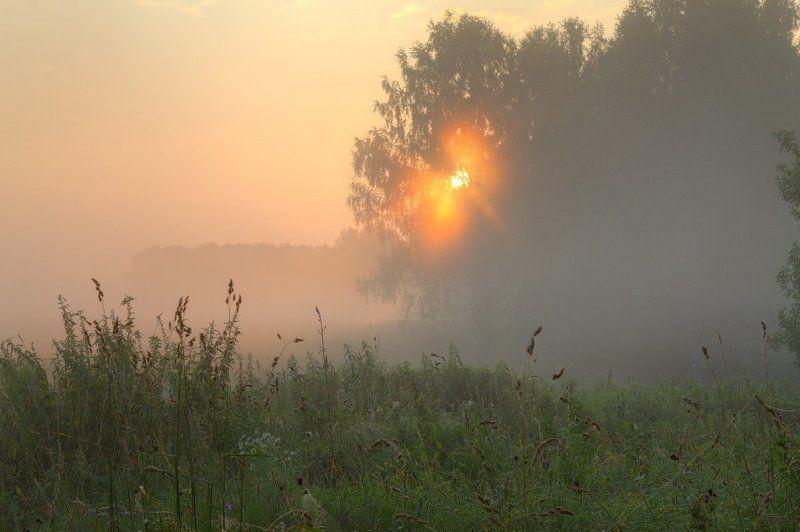 Лес, Лето, Небо, Пейзаж, Природа, Рассвет, Россия, Солнце, Трава, Туман, Утро Первые лучиphoto preview