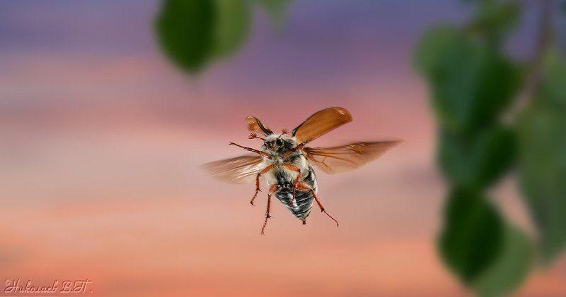 полет, майский жук Курс на юго-востокphoto preview
