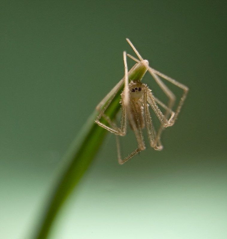 паук,макро,природа,трава //*\\\\photo preview