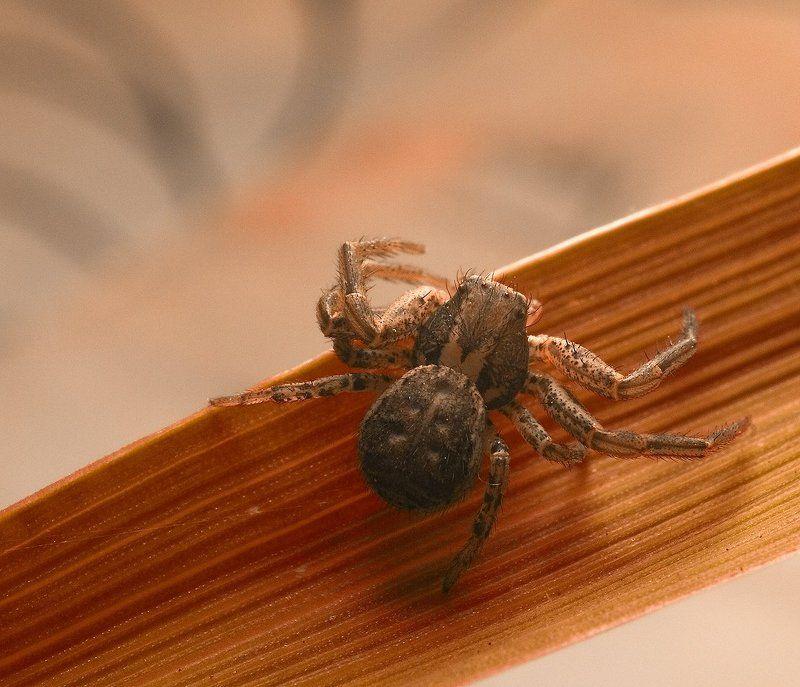 паук,макро,листик,природа ////*///photo preview