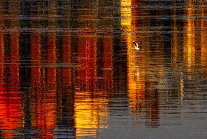 нева, вечер, краски, закат Прогулки по набережнойphoto preview