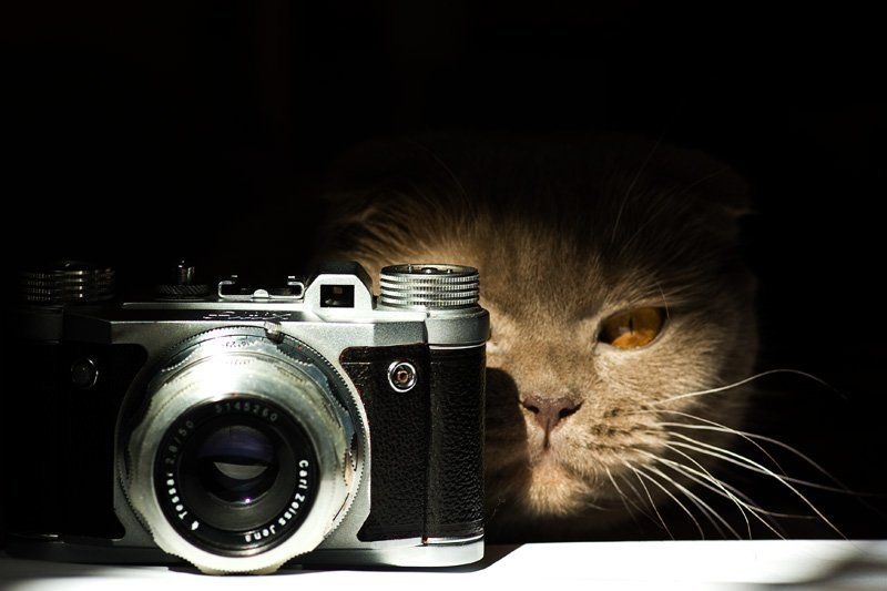 кот, altix Фотокотphoto preview