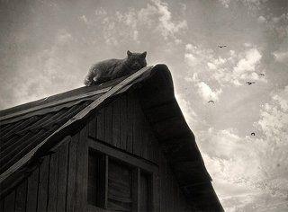 Про крышу и кота