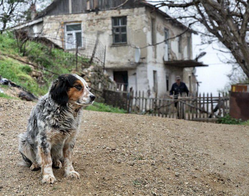 собако,друг,человеко дружище Бим.photo preview