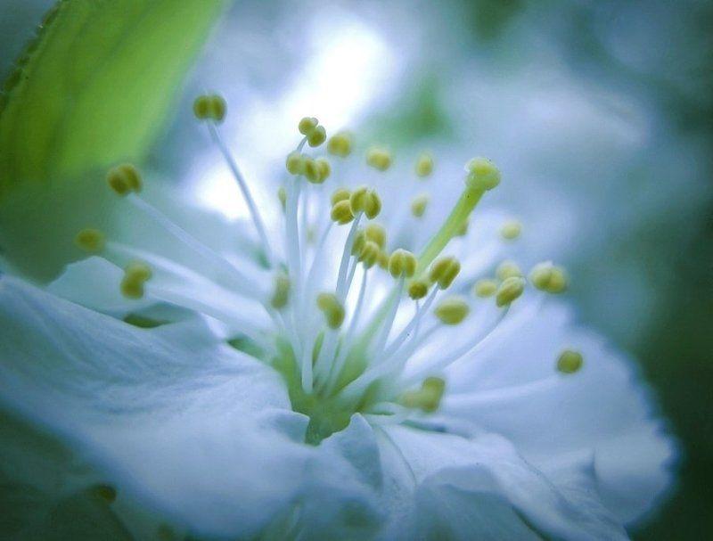 .......когда я одна в сердце леденящая весна....photo preview