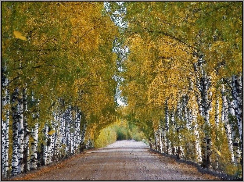 Осени партитурыphoto preview