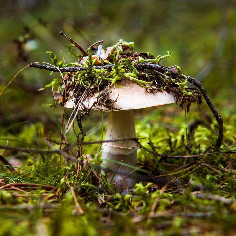 fashion, forest, mushroom Fashion Ladyphoto preview
