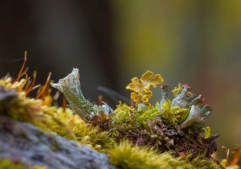 Природа, мох, лишайники, макросъемка В царстве мхов и лишайниковphoto preview