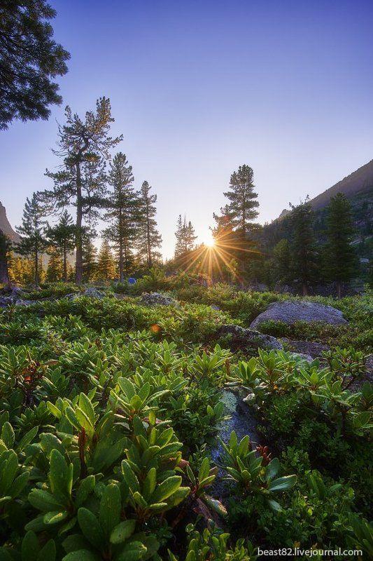 Ергаки Рододендроны ясным утромphoto preview