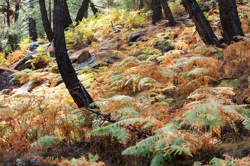 лес камни свет пейзаж греция папоротники The Forestphoto preview