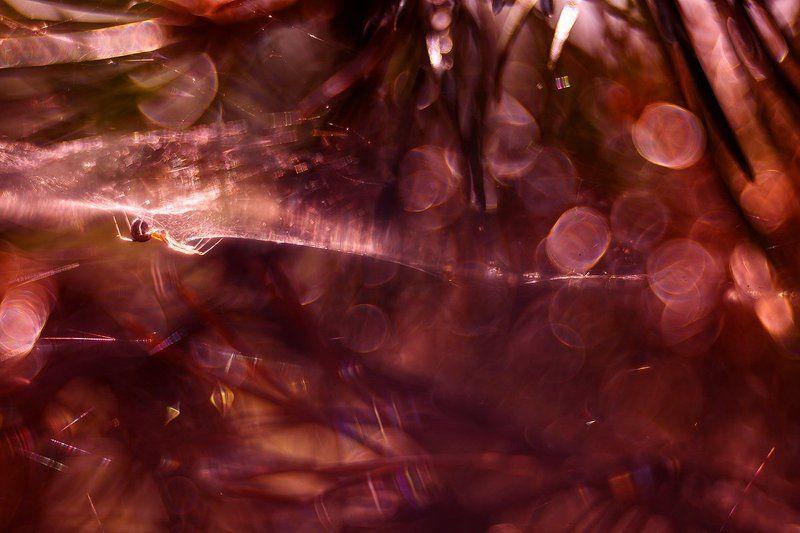 Паук паучковаяphoto preview