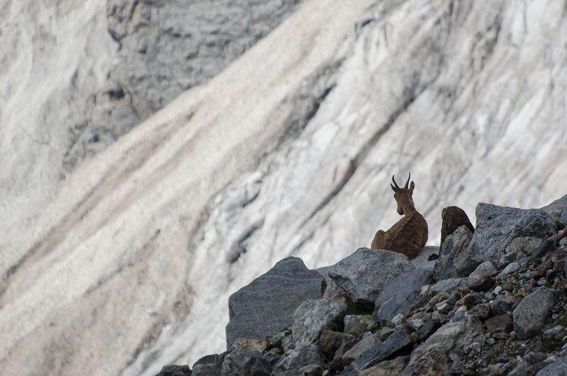 Горы козы Медитацияphoto preview