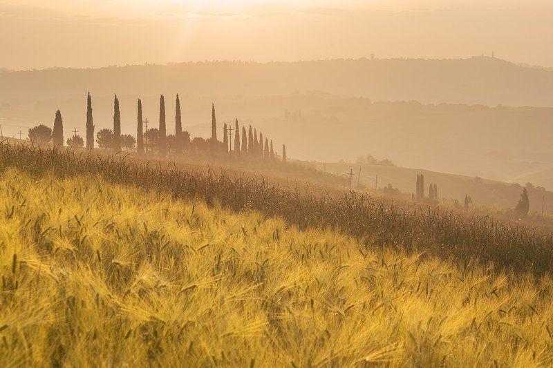 Тоскана Италия рассвет поле трава туман Поля Тосканыphoto preview