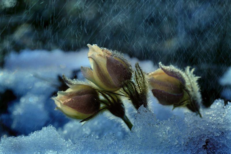 Весна, Дождь, Снег, Цветы Первый весенний дождикphoto preview
