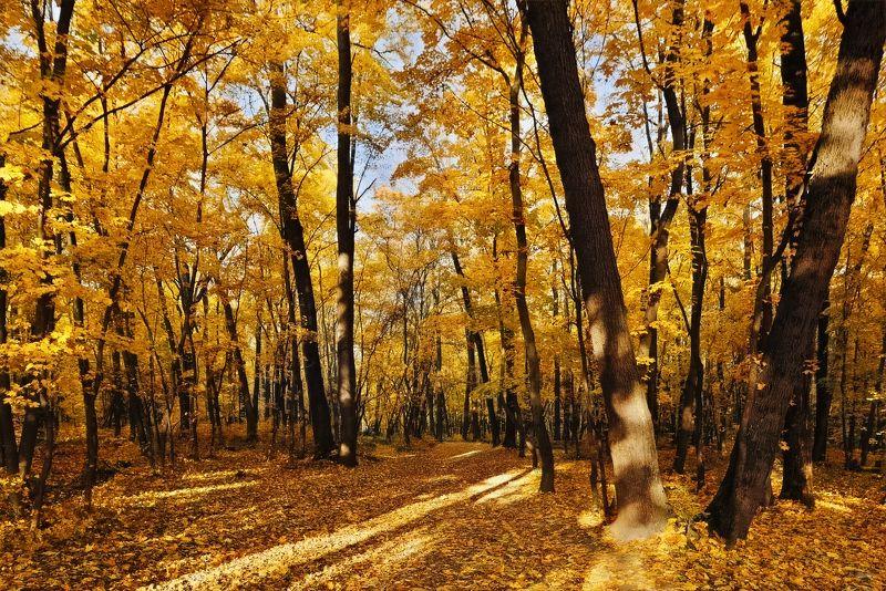 осень,лес,пейзаж осеньphoto preview