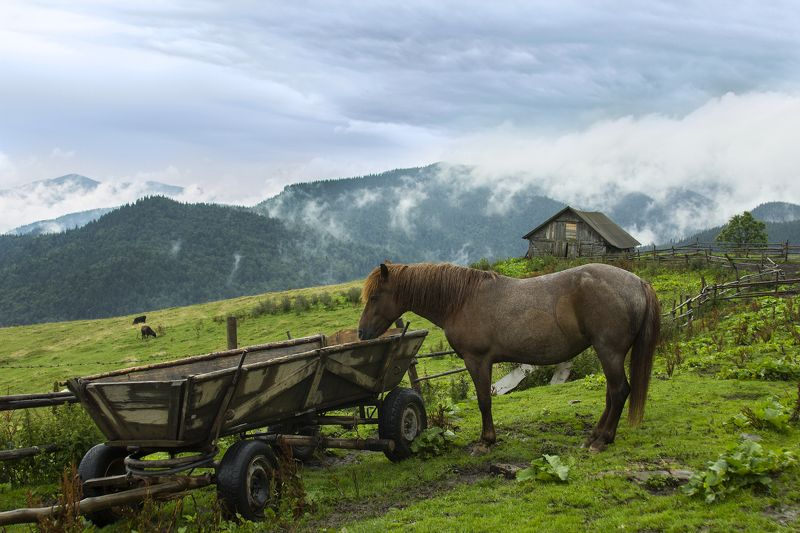 Лошадка уставшая повозку везти...photo preview