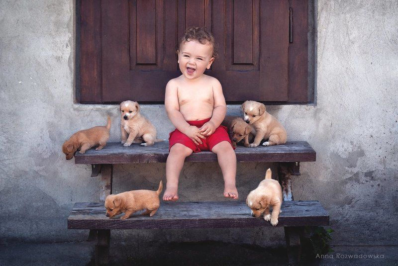 child, dogs, puppies, fun too cute!photo preview