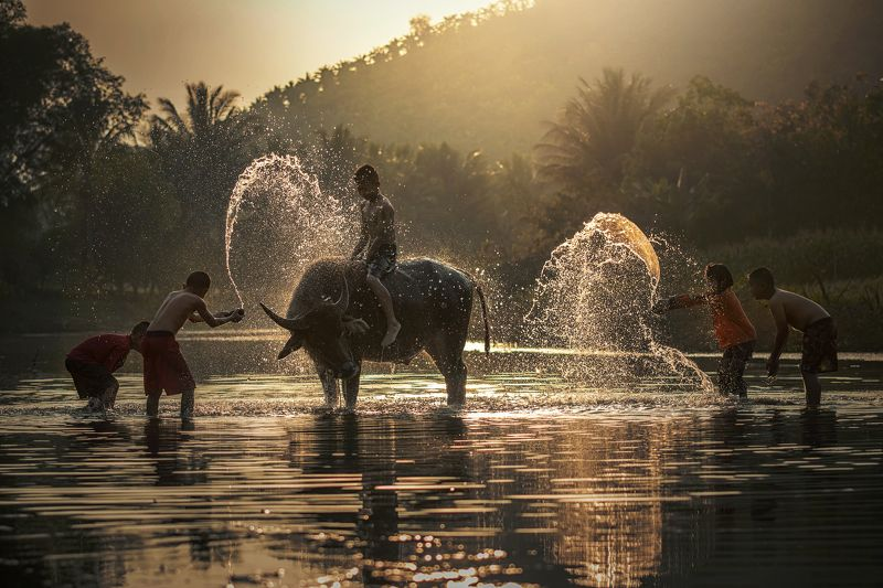 agriculture; asia; asian; background; beautiful; beauty; boy; buffalo; cambodia; cambodian; cheerful; child; country; cute; face; family; farm; farmer; farming; female; grass; green; hair; happiness; happy; healthy; herding; indonesia; laos; leisure; life Children shower Buffalo .photo preview