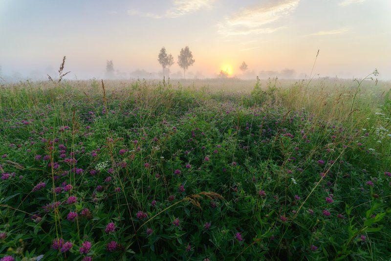 Июль, Клевер, Смоленская область Велижский рай Из июльского...photo preview