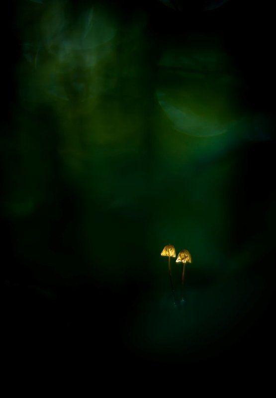 Лесные фонарики.photo preview