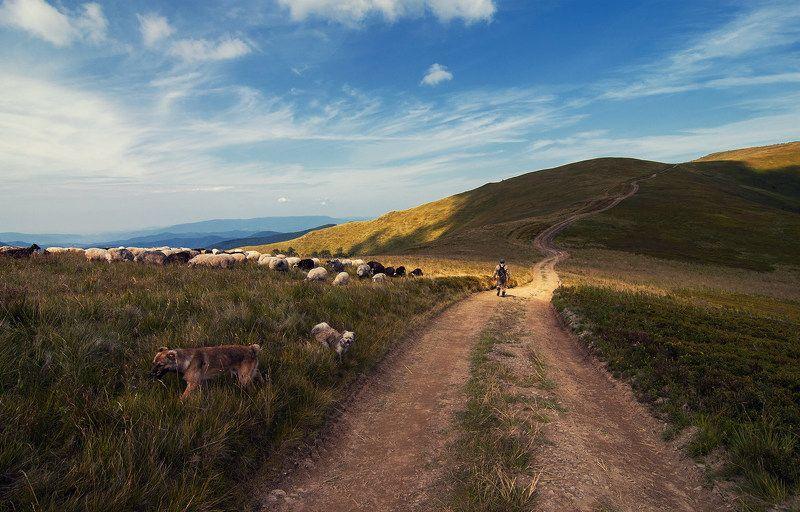 О пастухах и странникахphoto preview