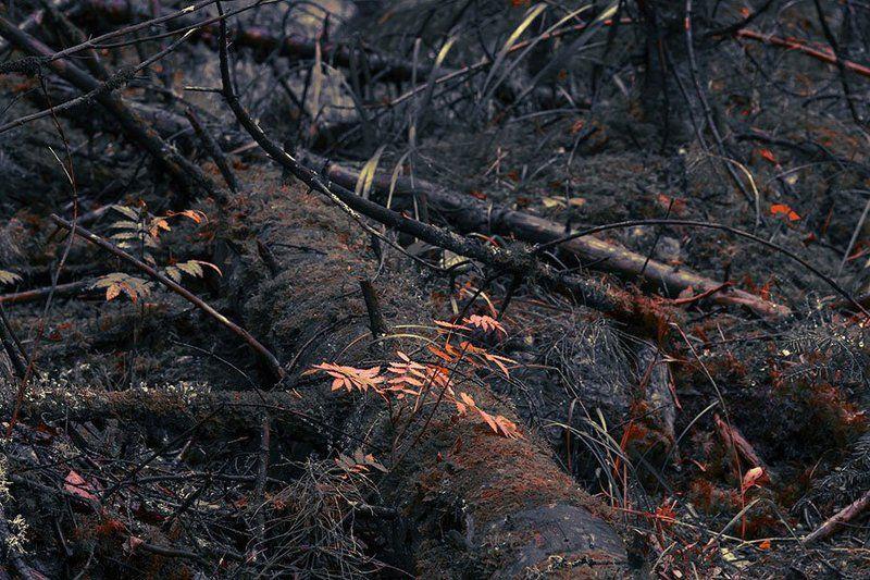 Природа, лес, деревья, рябина красная, осень Осеньphoto preview