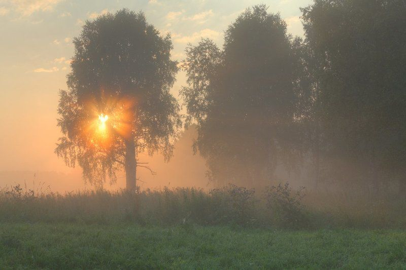 Деревья, Красота, Лето, Лучи, Небо, Пейзаж, Природа, Рассвет, Свежесть, Солнце, Туман, Утро Сквозь туманphoto preview
