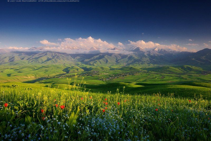 киргизия, жизнь, alamedin, kg, аламедин, ала-тоо, alatoo, kyrgyzstan, mountains, flowers, lazy_vlad, lazyvladphoto, кыргызстан, бишкек, bishkek Маленькая страна высоких горphoto preview