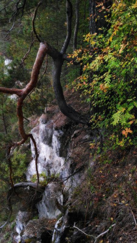 Сосны реки Держаphoto preview