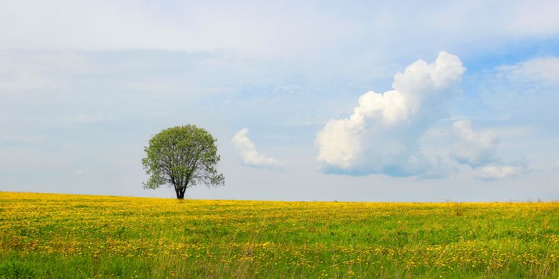 yellow, field, sky, landscape, nature, blue, sun, tree, green, cloud, dandelions, alone..photo preview